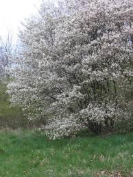 Virágzás alatt